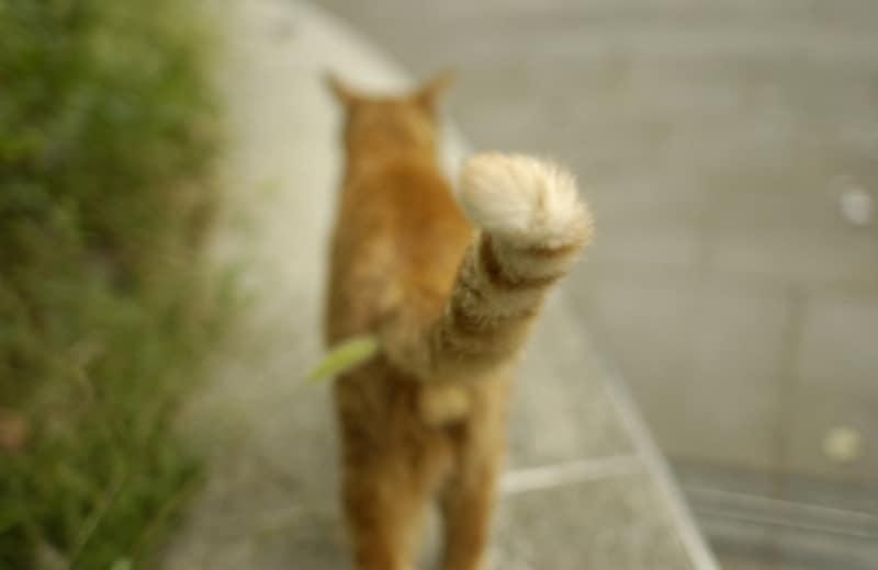 猫のしっぽには色んな気持ちが隠されています