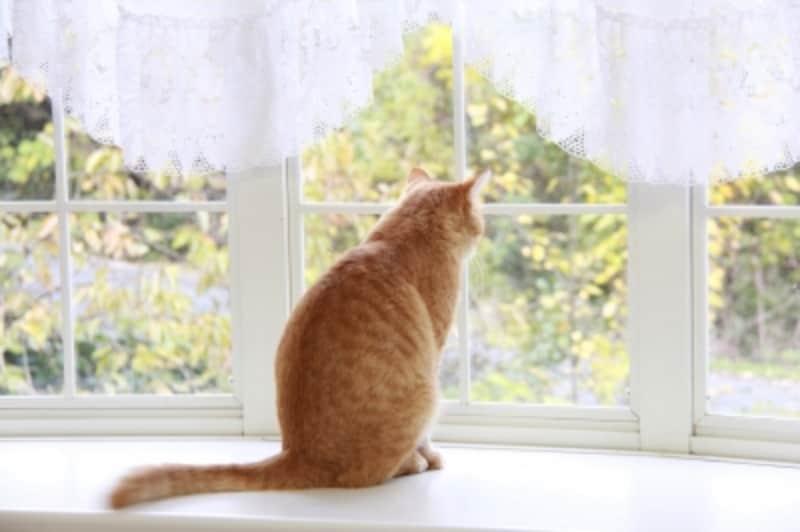 窓から外を眺めたい