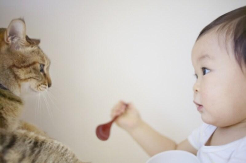 赤ちゃんと猫が仲良く暮らせることが一番ですよね