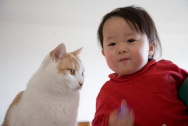 赤ちゃんと猫の同居はルールを守れば問題ありません