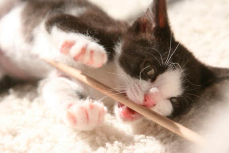 猫と遊ぶときは飼い主は冷静に興奮状態を確認しましょう