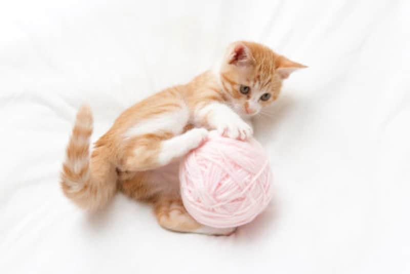 猫が毛糸玉に飛びつくのは狩猟本能を刺激されているから