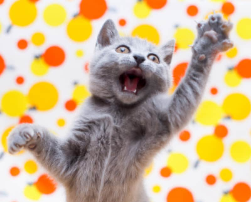 猫がひっかく状況を冷静に判断しましょう