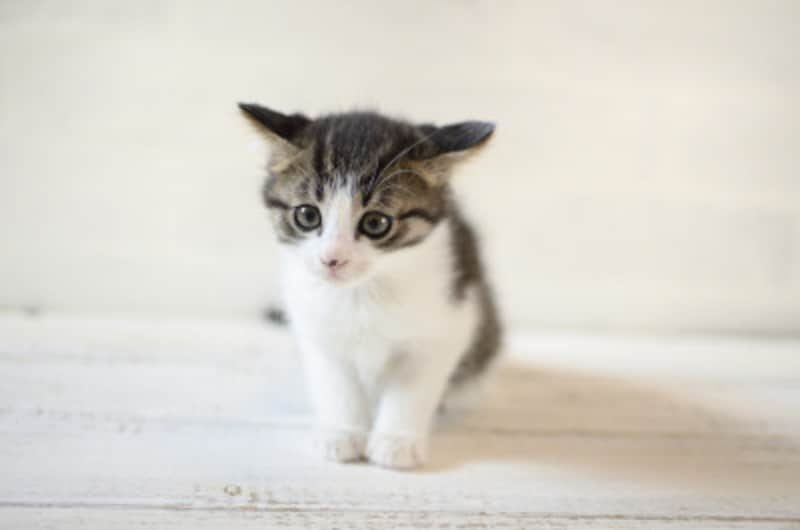 毛玉になりにくい猫のブラッシング
