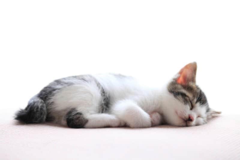猫が喜ぶマッサージ