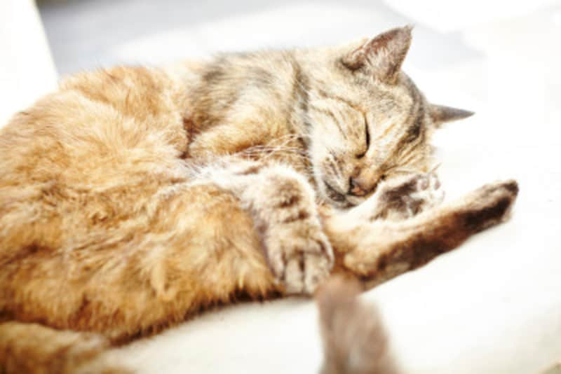 猫がぐったりした時の見分け方!体調不良か病気サインか