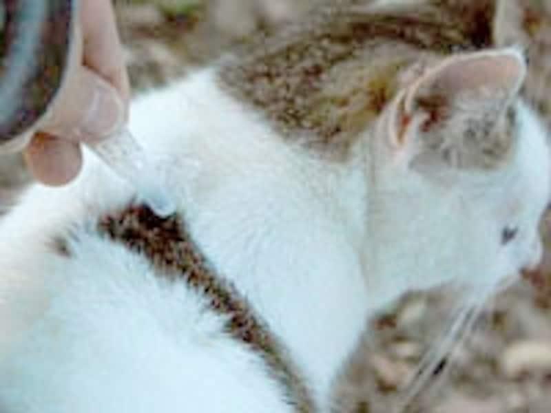 首に垂らすだけで簡単にノミやダニの駆虫ができます