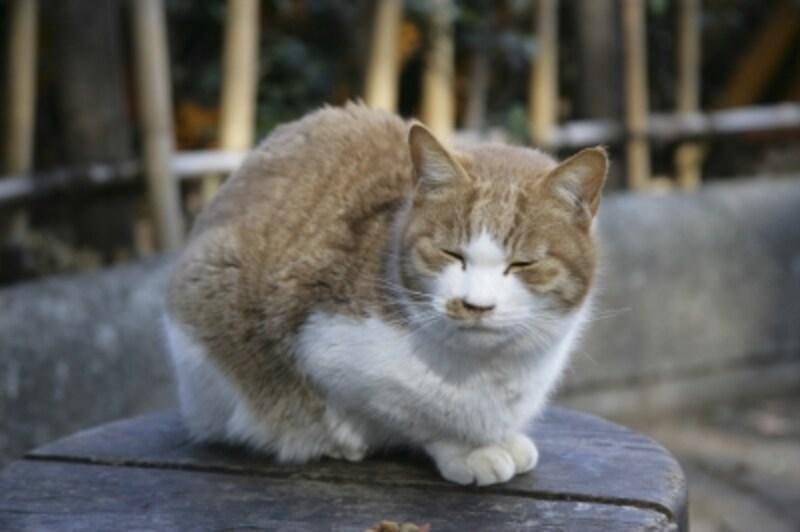 老猫・高齢猫のサイン~痩せる、白髪など~