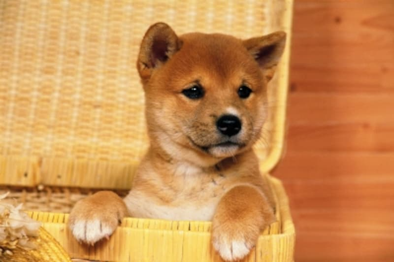 犬を飼う準備の前に、まずは本当に飼えるのかじっくり考えましょう
