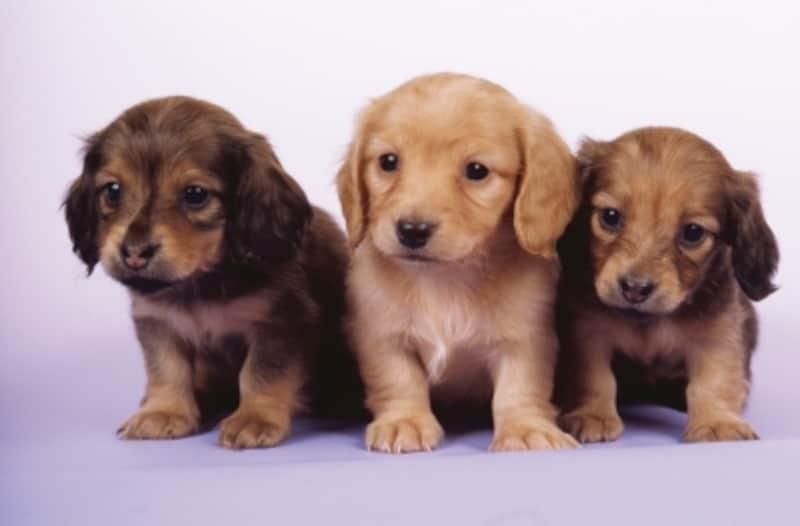 それぞれに合った子犬をお迎えしたいものですね