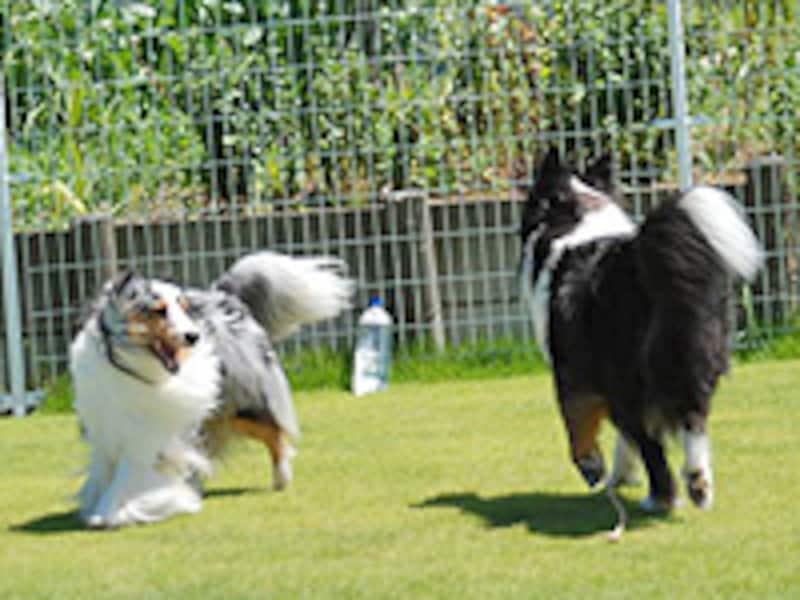 仲良く遊ぶ同居犬