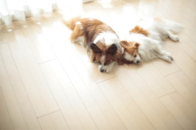 犬が幸せになる多頭飼いとは?