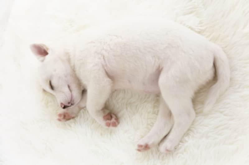 すやすや眠っている子犬
