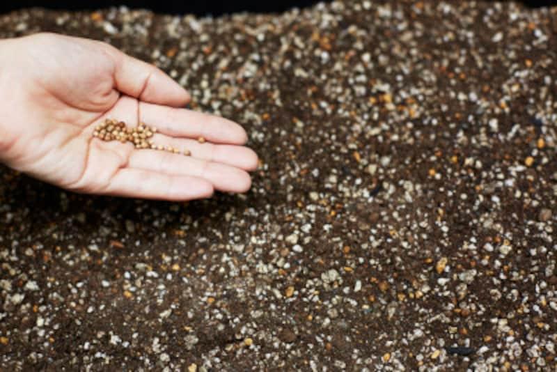 ガーデニングの種まきと植え付けを解説
