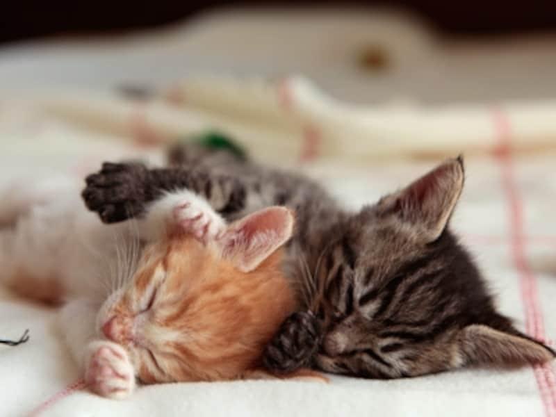 ふたり兄弟、身体がくっついてると安心して寝られます