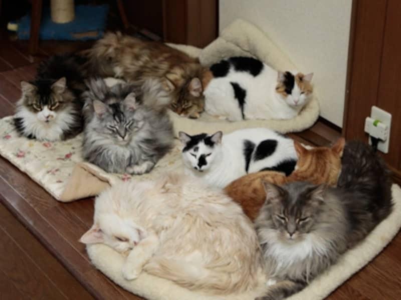 真冬になるとホットカーペットのクッションの上が猫の島になります