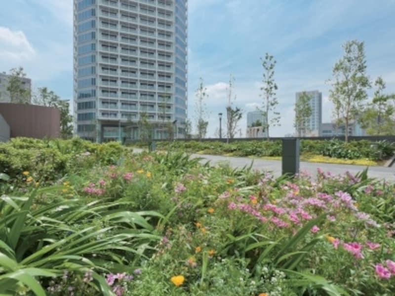 住宅街区の敷地をおおう豊かな緑
