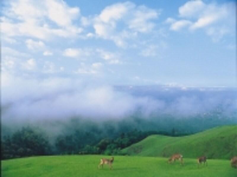 若草山と鹿