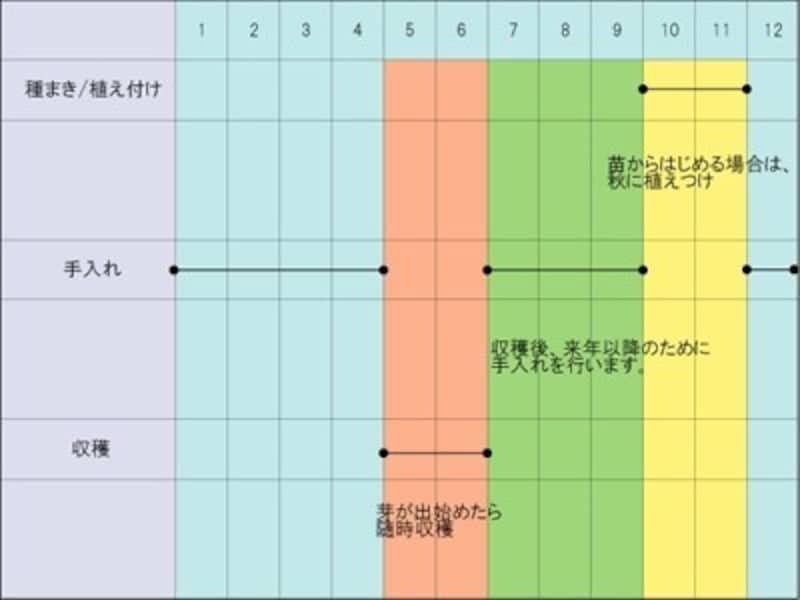 アスパラガスの栽培スケジュール