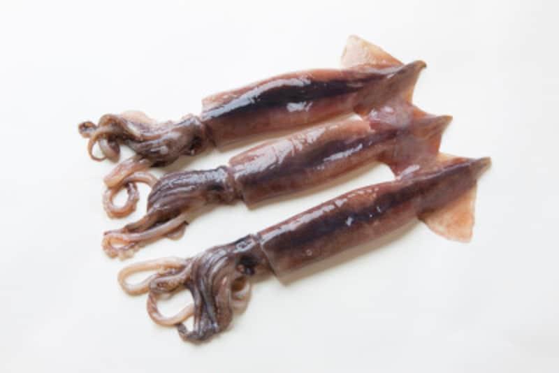 イカの種類と旬を知ろう