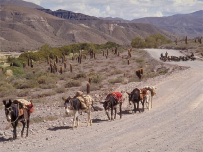 アルゼンチン北部のアンデスの風景は、アルゼンチン人の心の故郷 写真提供:アルゼンチン観光局