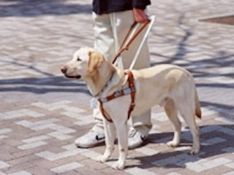 盲導犬でのお手伝い