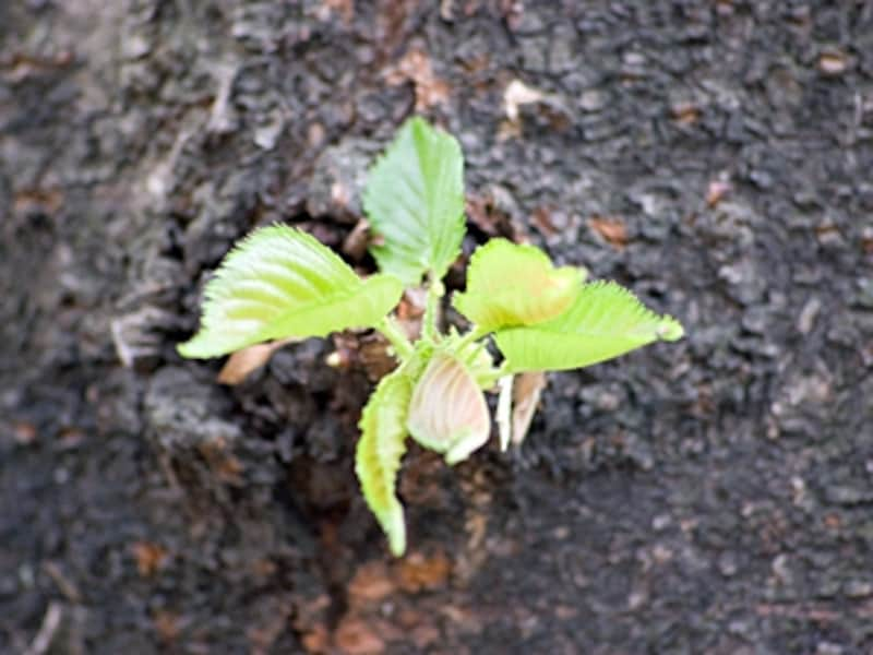 風水リフォームで、小さな金運の芽を逃さずシッカリ育てて花開かせましょう
