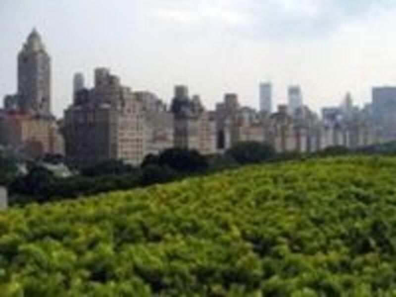 公園の緑と建築物を眺めながらコーヒーを