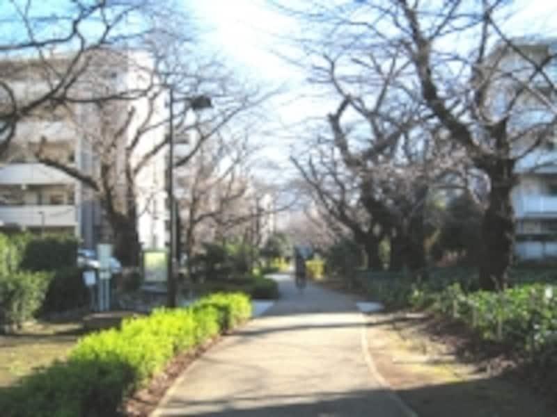 烏山川緑道