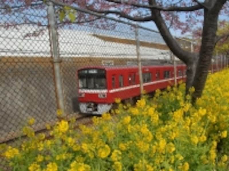赤い電車と菜の花
