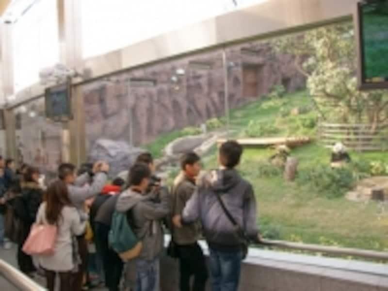 パンダ展示館