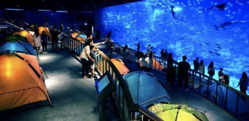 世界最大級の水族館「シー・アクアリウム™」