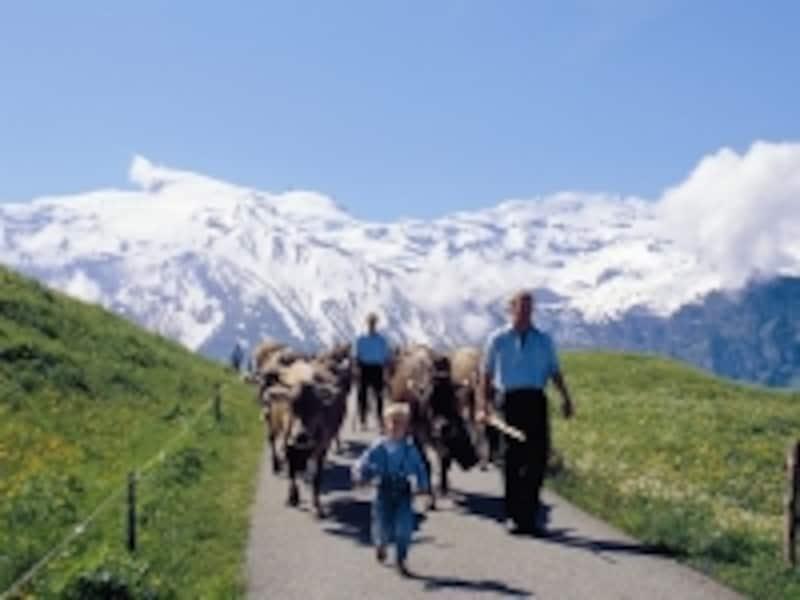 スイスの酪農イメージ