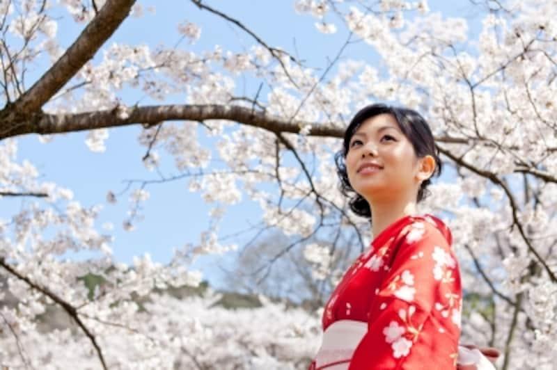 桜の柄の着物に関するマナーから、春の花の上手な取り入れ方は?