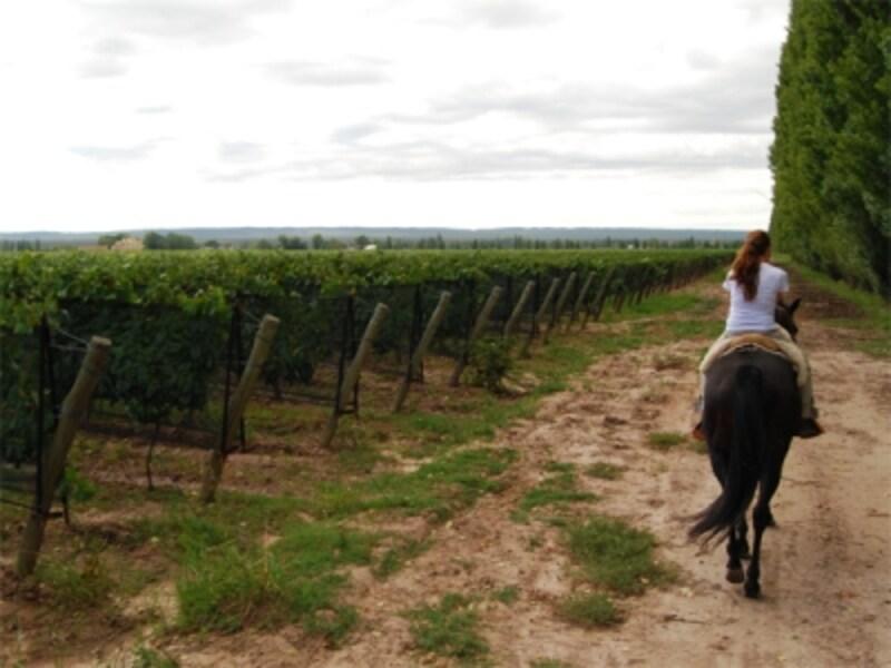 乗馬をしながらブドウ畑を見学することのできるワイナリーもある