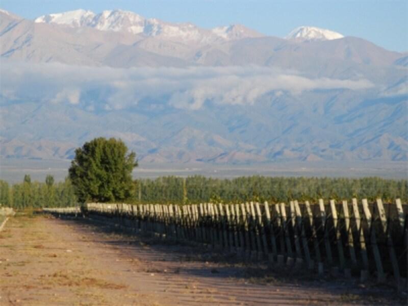 アンデス山脈のふもとには、数多くのワイナリーが存在する