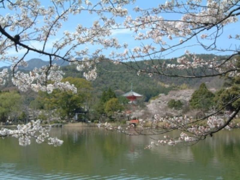 大覚寺・大沢池と桜(1)