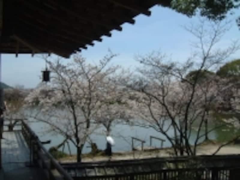 大覚寺・大沢池と桜(2)