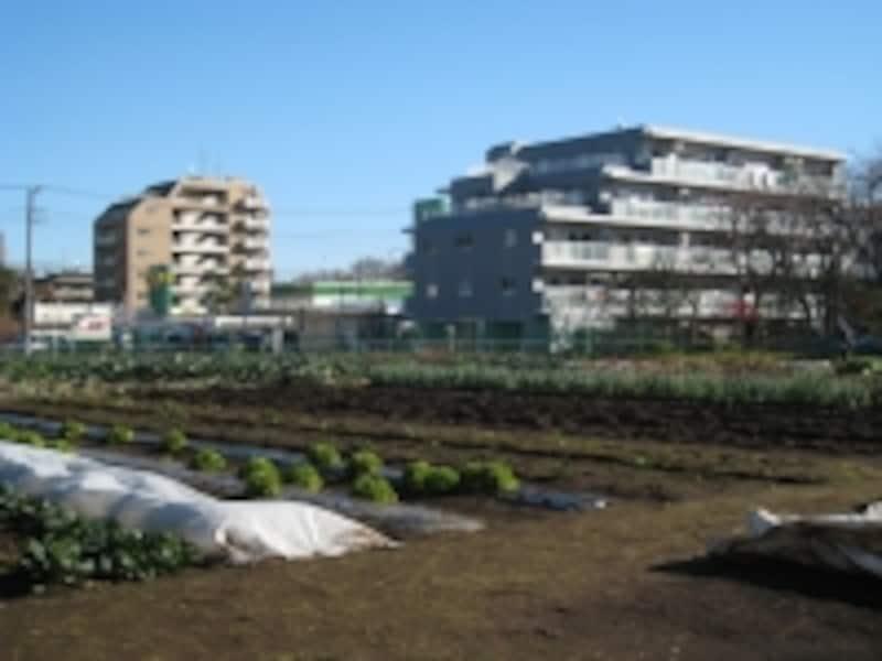 世田谷区ふれあい農園