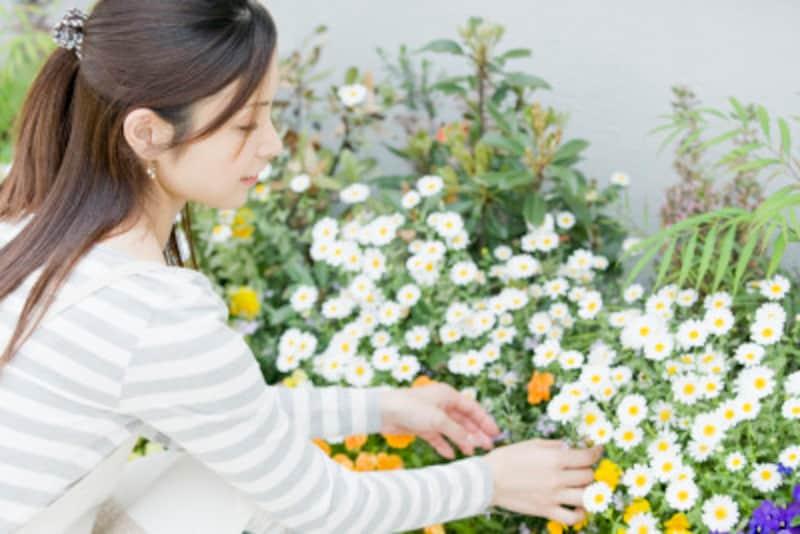 初夏の庭を豊かにする花や植物
