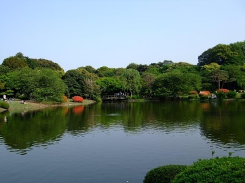 池の水に映る姿も美しい