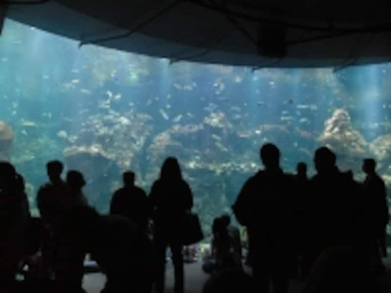 海の生物に直接触ることのできるコーナーもある
