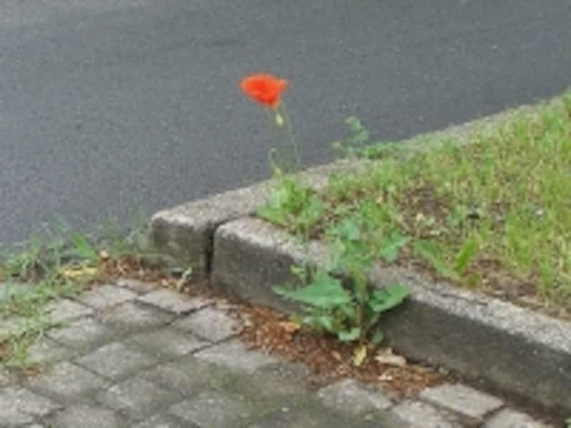 小さな隙間で咲く雑草