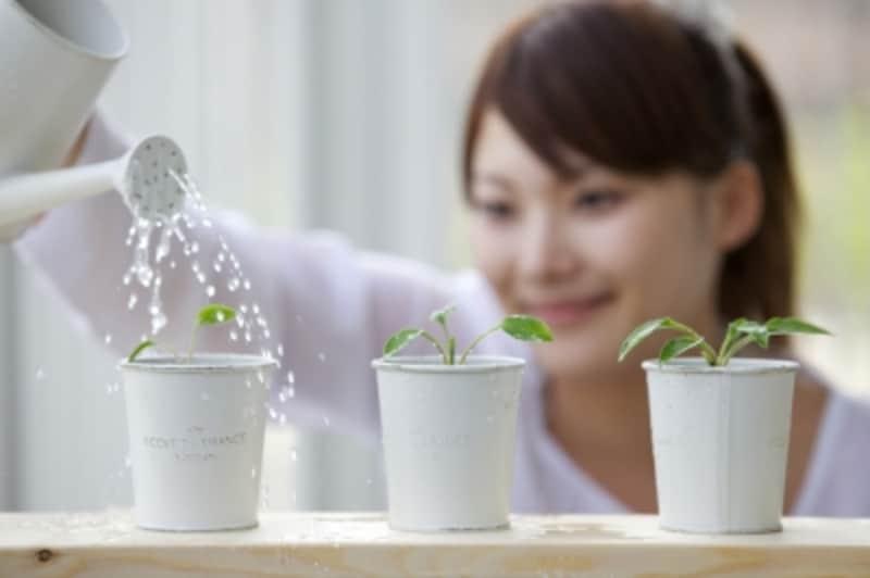 一人暮らしが寂しいとき、植物のお世話をしたり、花を活けたりするのは、リフレッシュ効果がとても高いです