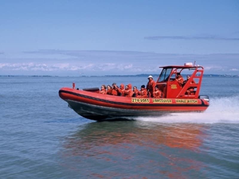 ホエールウォッチングの主流はゾディアックと呼ばれる大型ゴムボートの高速船ツアー(C)VancouverWhaleWatch