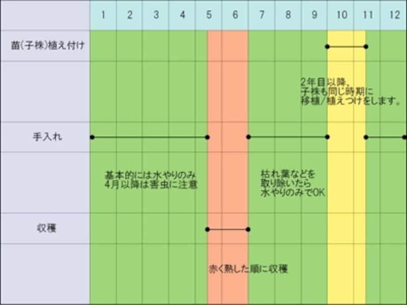 イチゴの栽培スケジュール