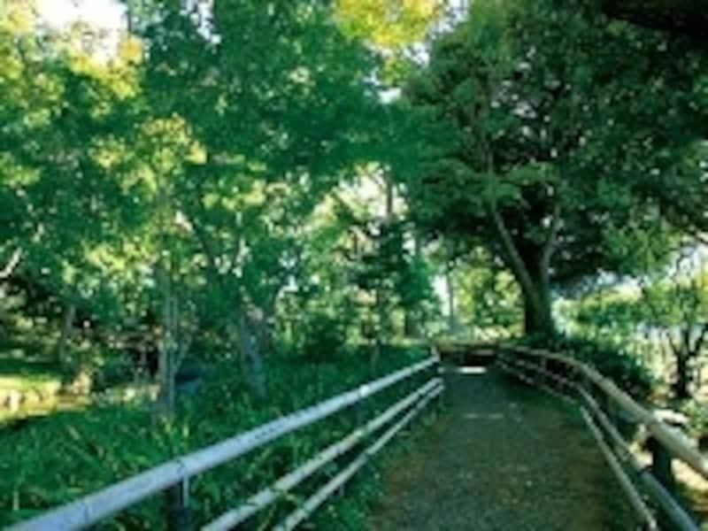 緑濃い木立ちが涼しげな蘇峰公