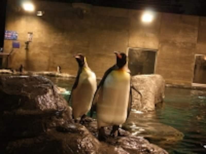 ペンギン(夜)