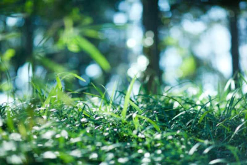 庭の雑草対策をご紹介します