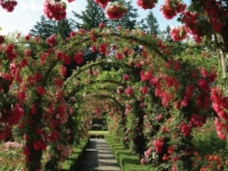 夏の最盛期にはバラの芳醇な香りが周囲を包み込みます(C)ButchartGradens